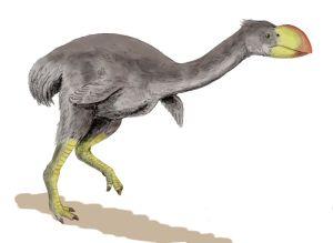 Dromornis_stirtoni_BW